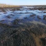 seaweed pic 1