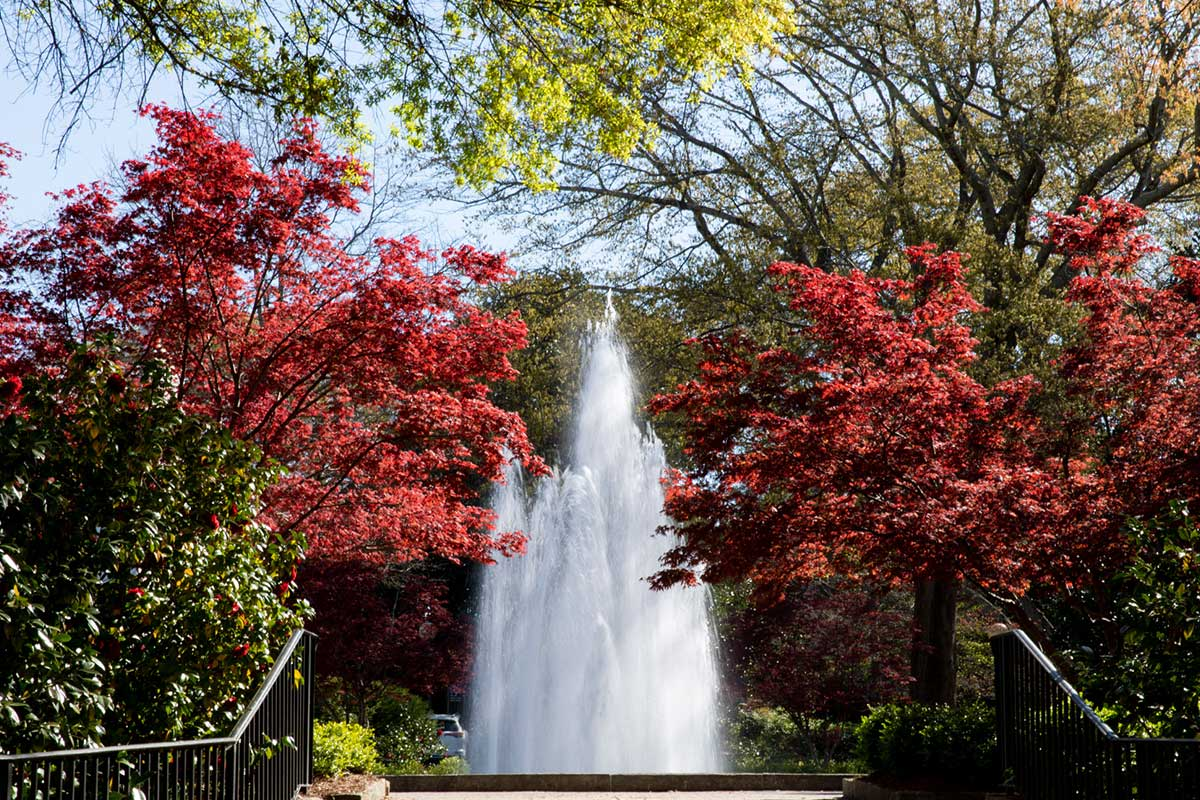UGA Campus in spring