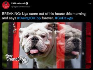 Uga peeking out of doghouse